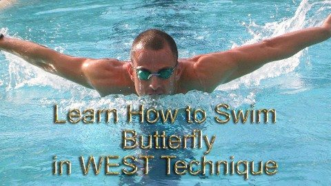 swim buttterfly